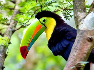 costa-rica-photo24